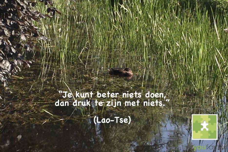 quote Lao-Tse: Je kunt beter niets doen, dan druk te zijn met niets.